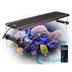 IT5080_Fish3